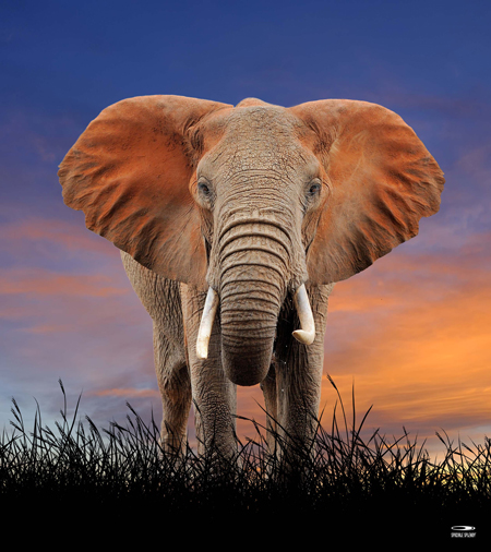 9215-Elephant_160x180def