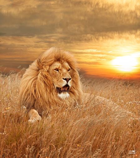 9217-Lion_160x180def