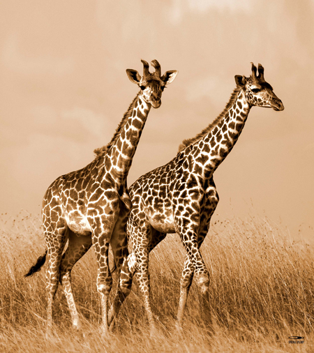 9220-Giraffe_160x180def